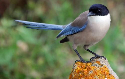 10月15日の誕生鳥の意味|お祝い品.com